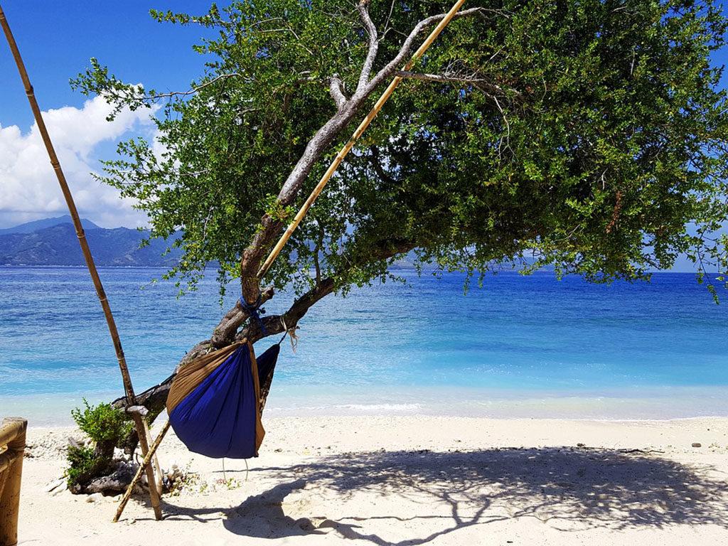 árbol inclinado con hamaca