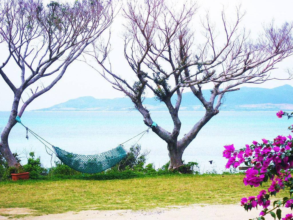 hamacas para árboles en jardín o campo 20